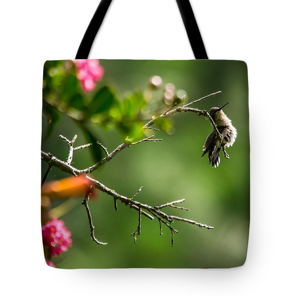 Bird Tote Bag featuring the photograph Odd Pose - Hummingbird by Alicia Collins