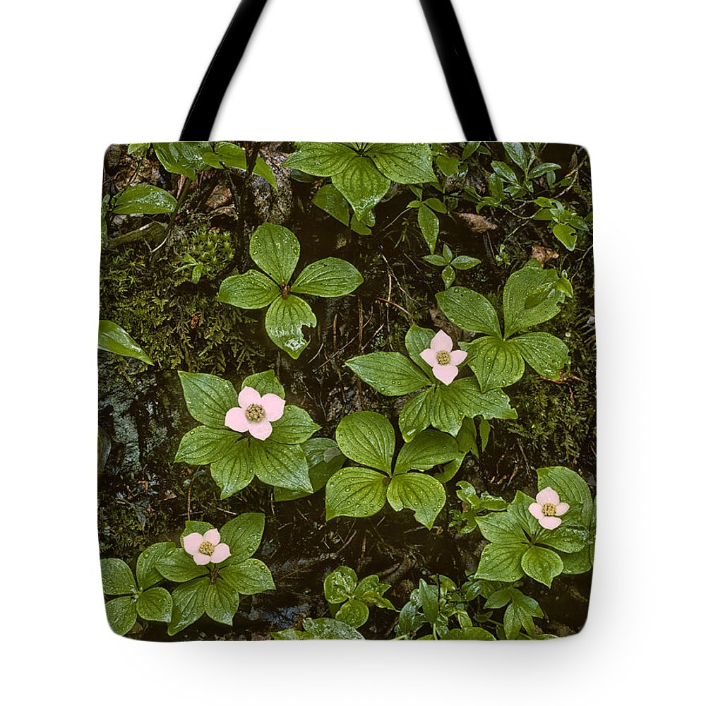 Wildflowers Tote Bag featuring the photograph Ode To Eliot Porter by Irwin Barrett