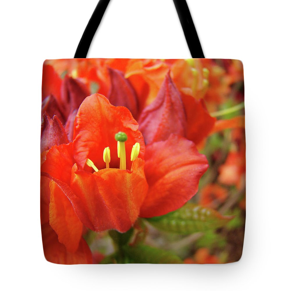 Orange Tote Bag featuring the photograph Office Art Prints Orange Azalea Flowers 20 Giclee Prints Baslee Troutman by Baslee Troutman