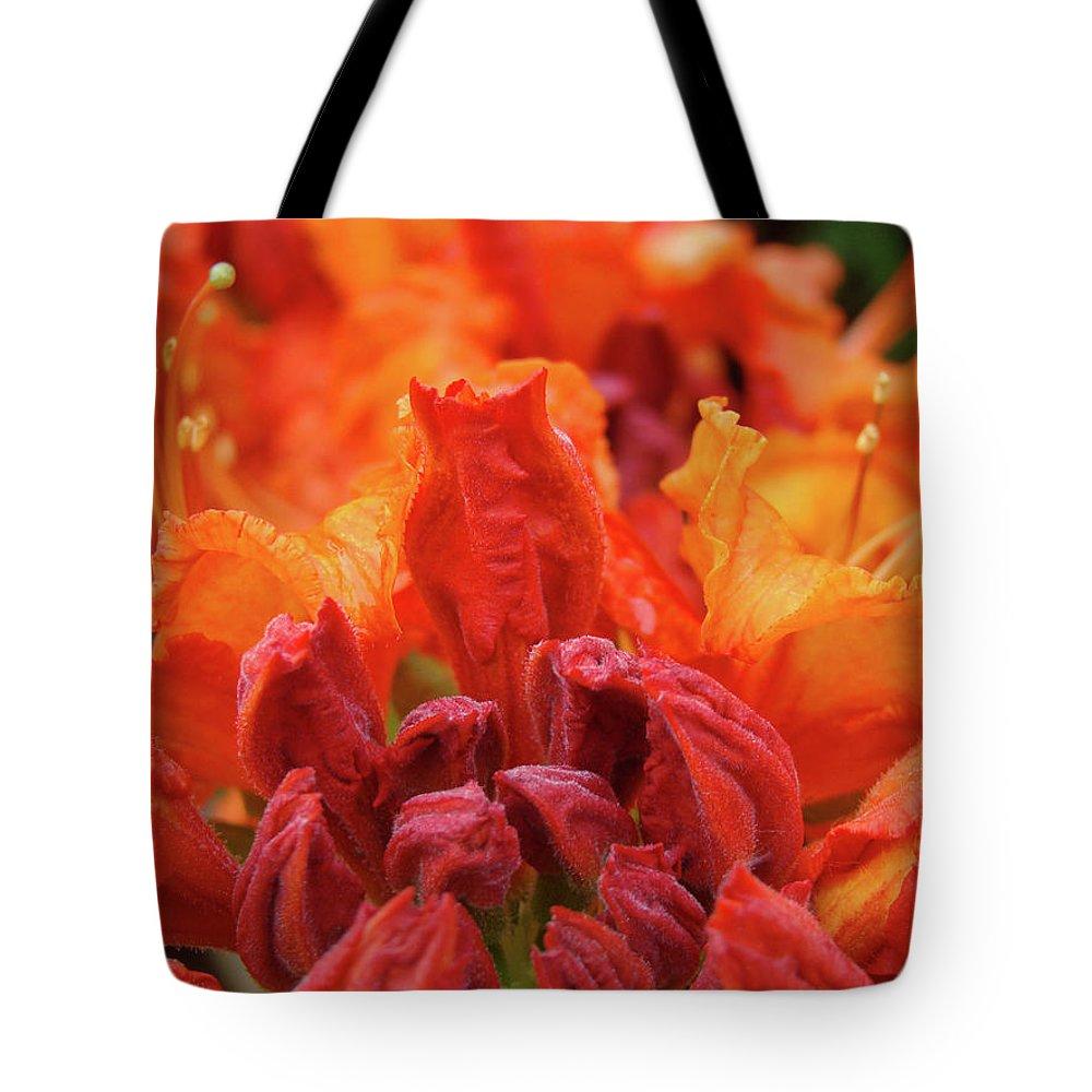 �azaleas Artwork� Tote Bag featuring the photograph Office Art Prints Orange Azaleas Flowers 9 Giclee Prints Baslee Troutman by Baslee Troutman