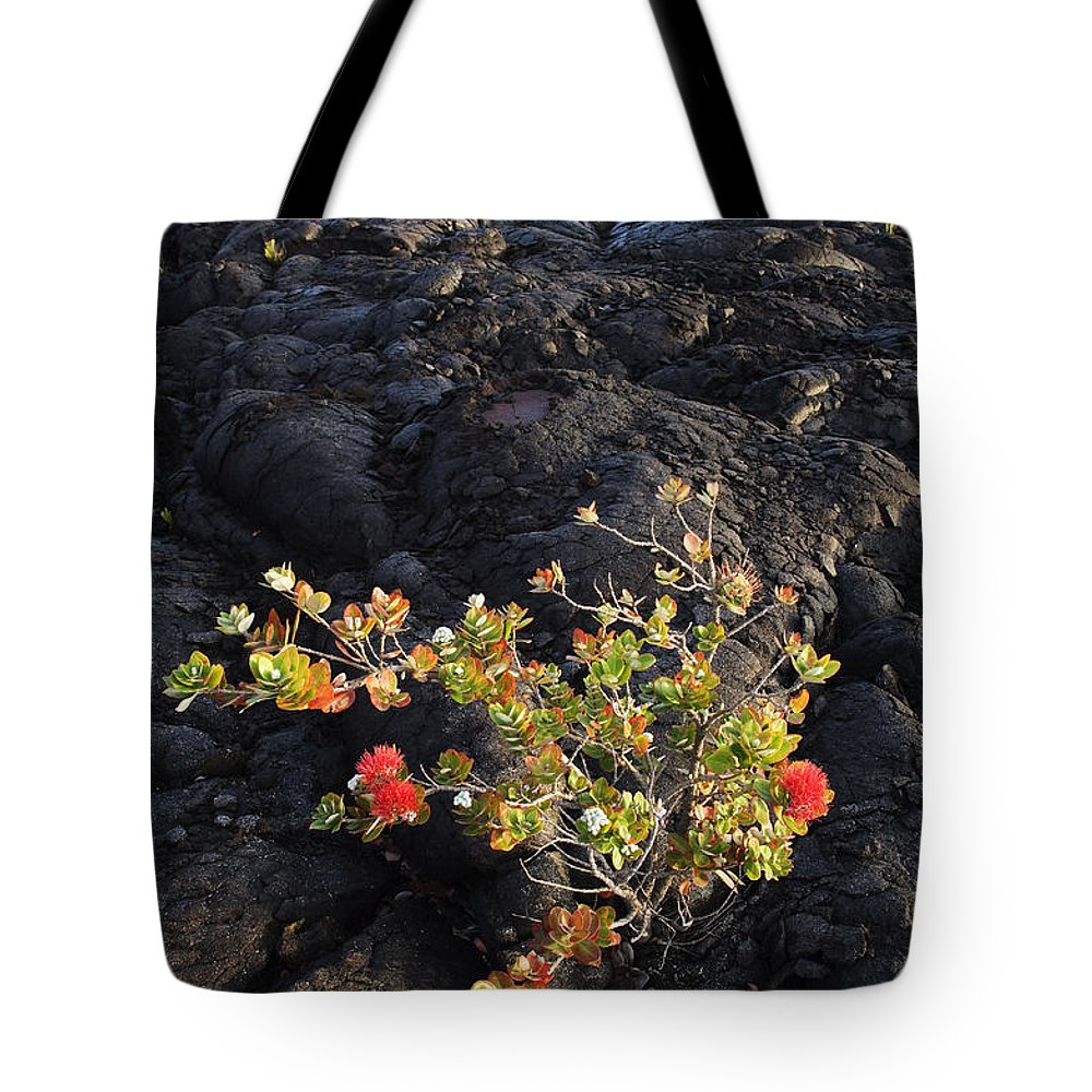 Beginning Tote Bag featuring the photograph Ohia Lehua by Greg Vaughn - Printscapes