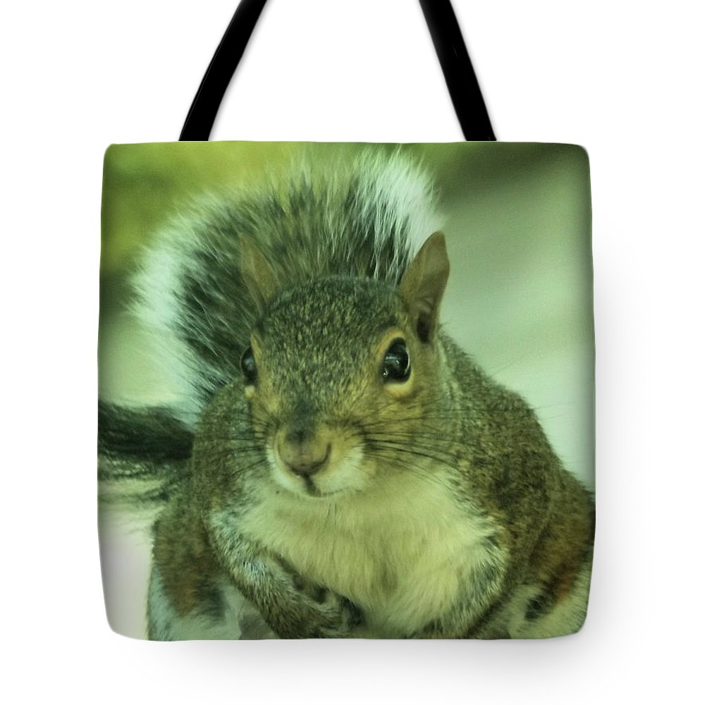 Squirrels Tote Bag featuring the photograph Ok Boss by Angelcia Wright