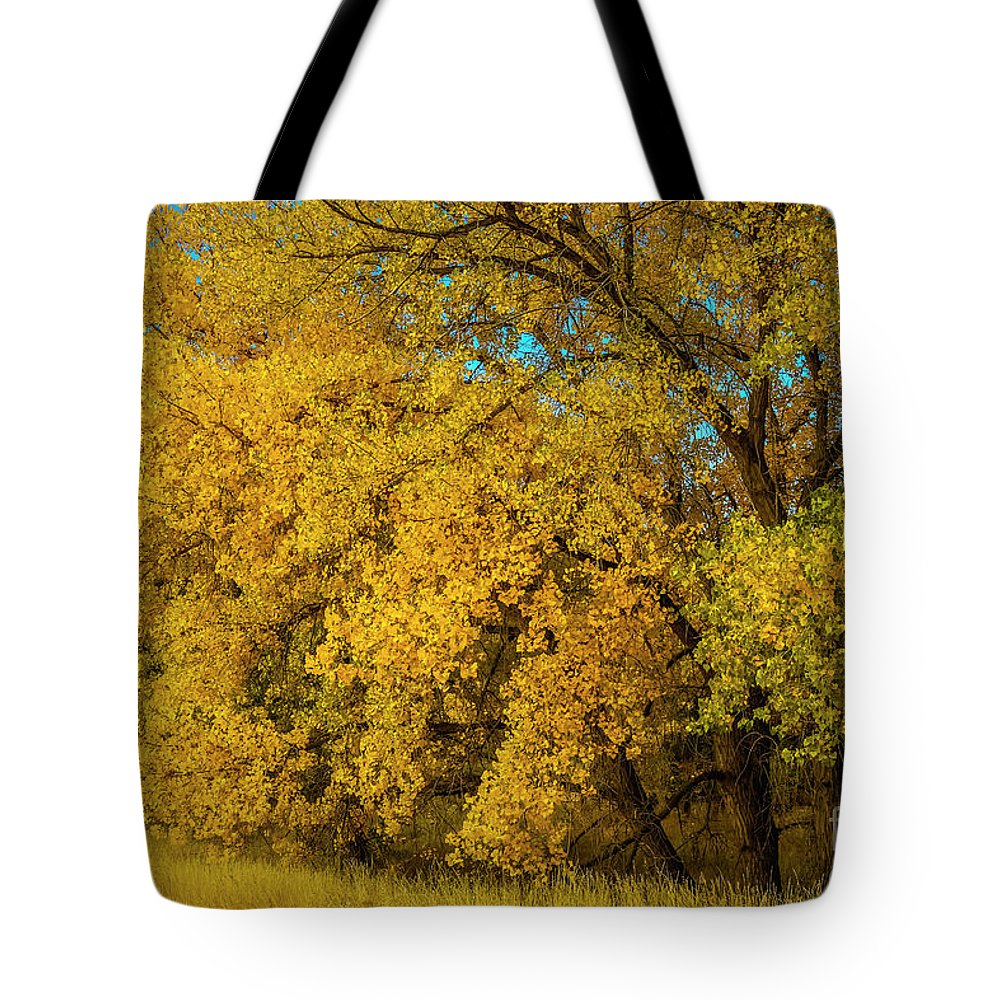 Fall Colors Tote Bag featuring the photograph Old Yellar by Jon Burch Photography