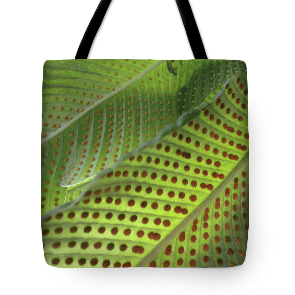 Tropical Plants Tote Bag featuring the photograph On The Dotted Lines by Trish Hale
