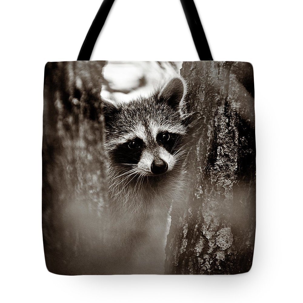 Racoon Tote Bag featuring the photograph On Watch - Sepia by Christopher Holmes
