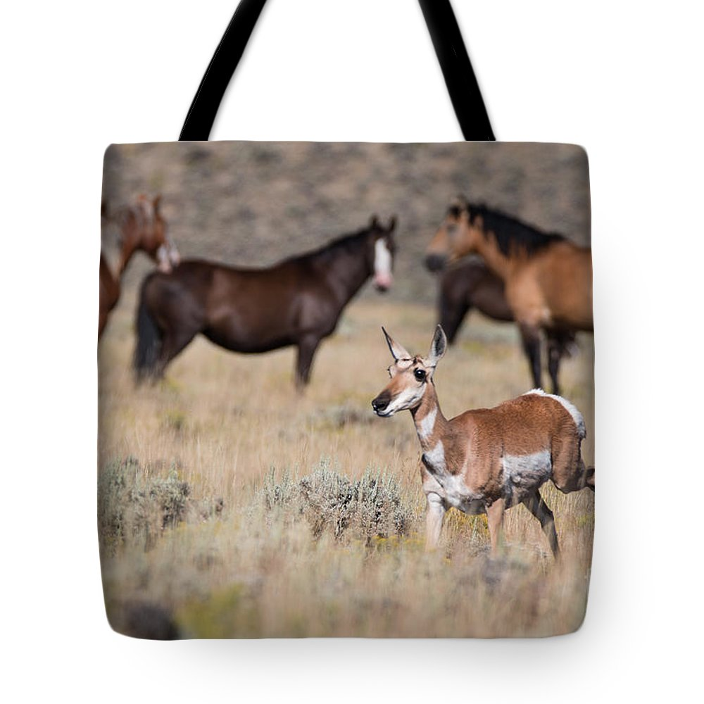 Mustangs Tote Bag featuring the photograph One Of These Things Is Not Like The Others by Sally E Wright