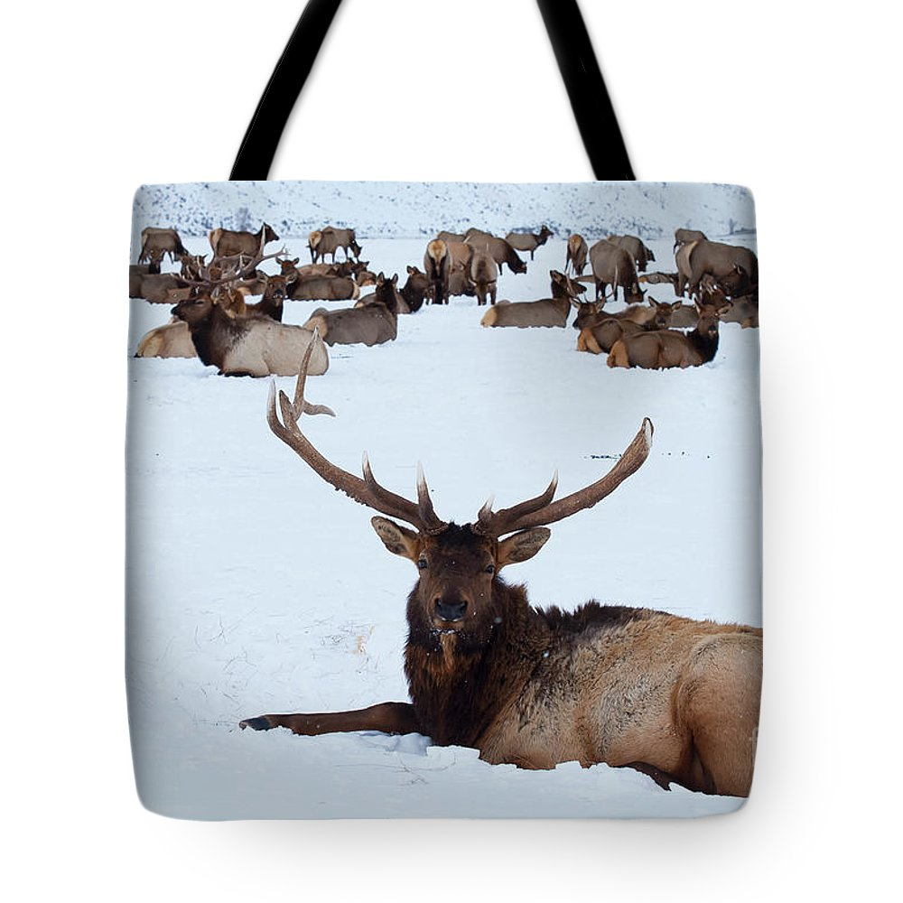 Elk Reservation Tote Bag featuring the photograph One Plus A Few More by Bob Phillips
