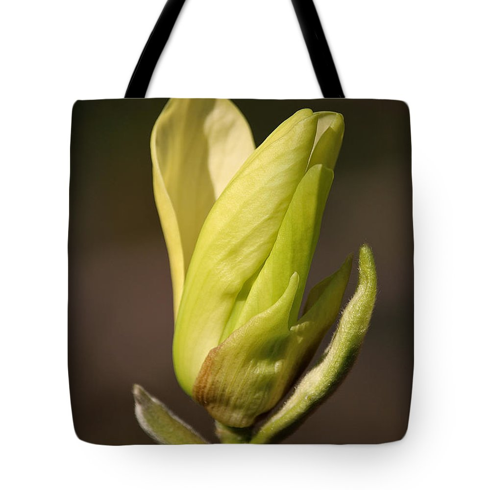 Flower Tote Bag featuring the photograph Opener by Susan Herber