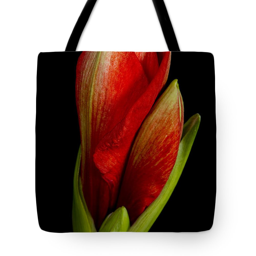Amaryllis Tote Bag featuring the photograph Orange Amaryllis Bloom by James BO Insogna