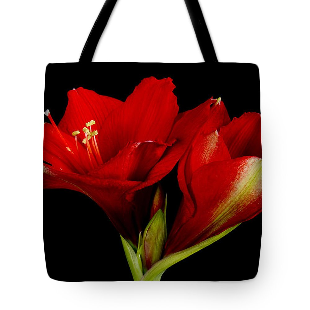Amaryllis Tote Bag featuring the photograph Orange Amaryllis Hippeastrum 12-25-2010 by James BO Insogna