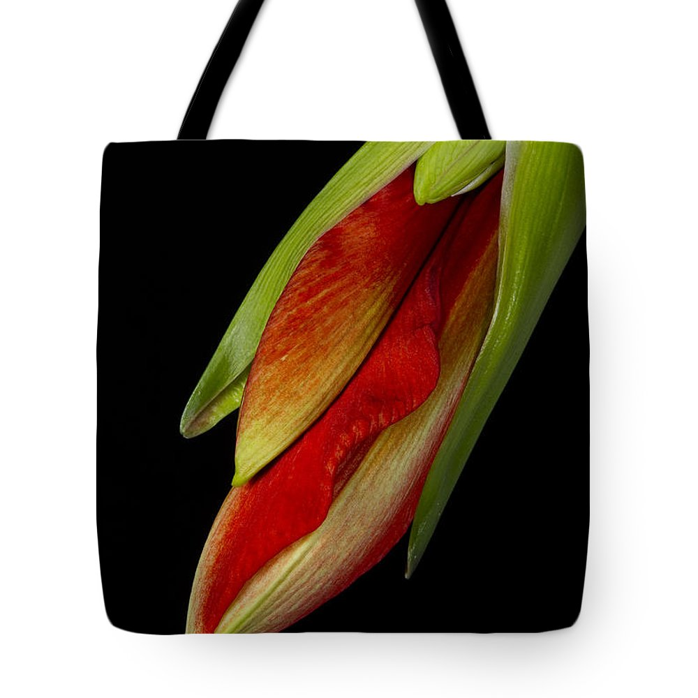 Amaryllis Tote Bag featuring the photograph Orange Amaryllis Hippeastrum In The Beginning 2-21-10 by James BO Insogna