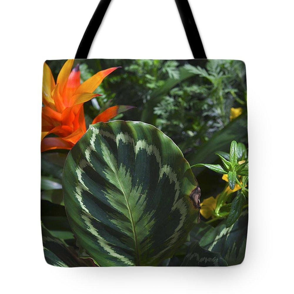 Orange Flower Tote Bag featuring the photograph Orange Flower Longwood Gardens by Mark Holden