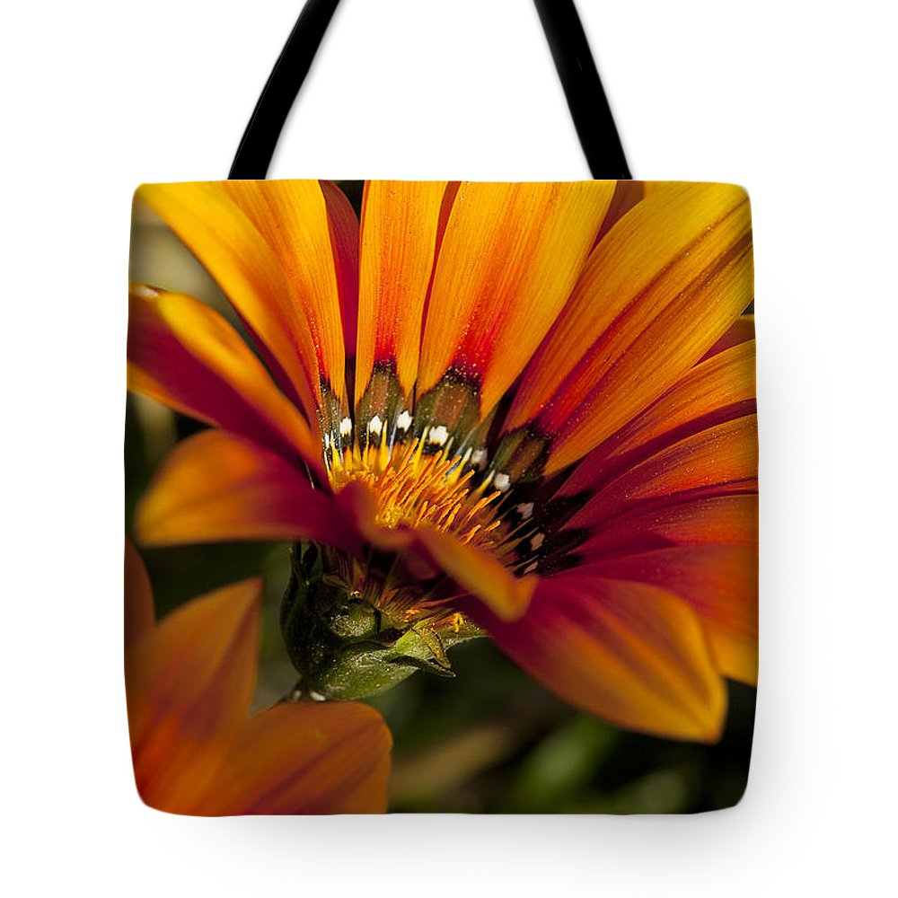 Flowers Tote Bag featuring the photograph Orange Flower Print by Kelley King