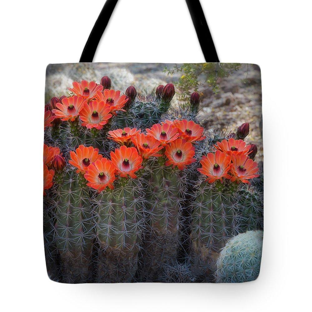 Hedgehog Cactus Flowers Tote Bag featuring the photograph Orange Hedgehog Patch by Saija Lehtonen