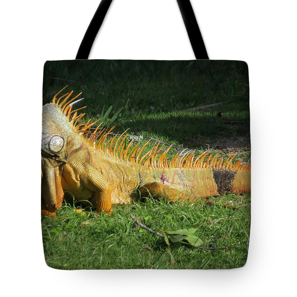 Reptile Tote Bag featuring the photograph Orange Iguana by Frank Townsley