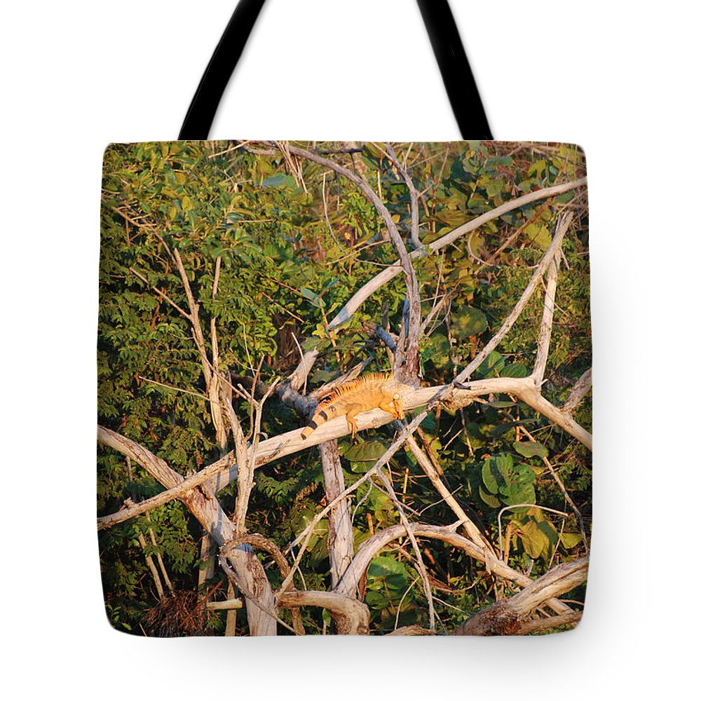 Wood Tote Bag featuring the photograph Orange Iguana by Rob Hans