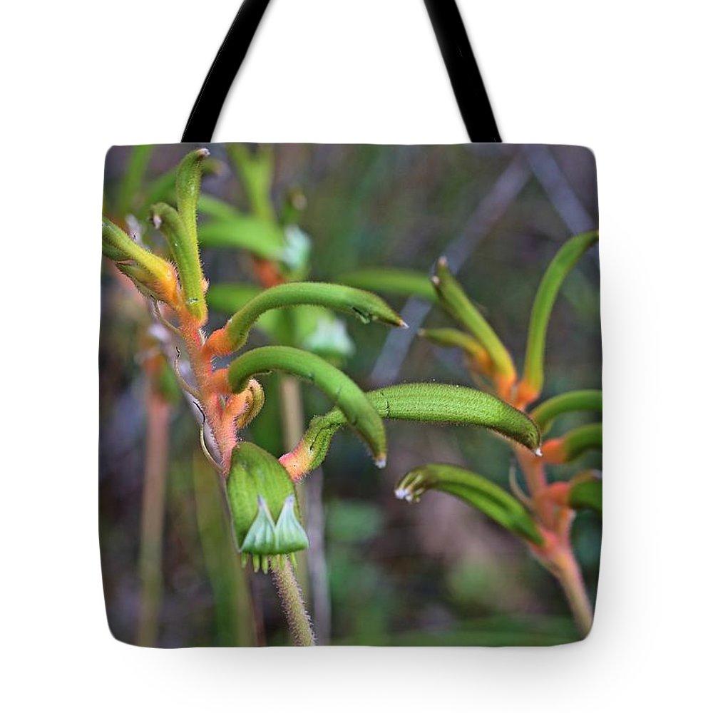 Kangaroo Paw Tote Bag featuring the photograph Orange Kangaroo Paw by Michaela Perryman