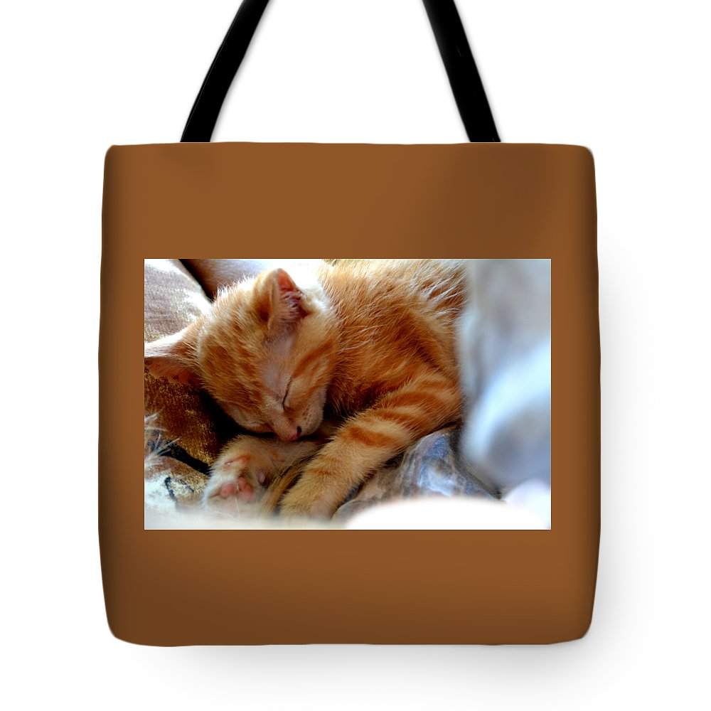 Kitten Tote Bag featuring the photograph Orange Kitten Sleeping In Silk And Satin by Reva Steenbergen