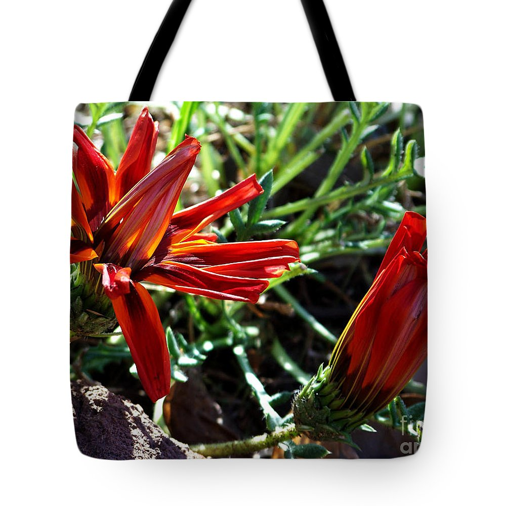 Gazania Tote Bag featuring the photograph Orange Power by Kathy McClure