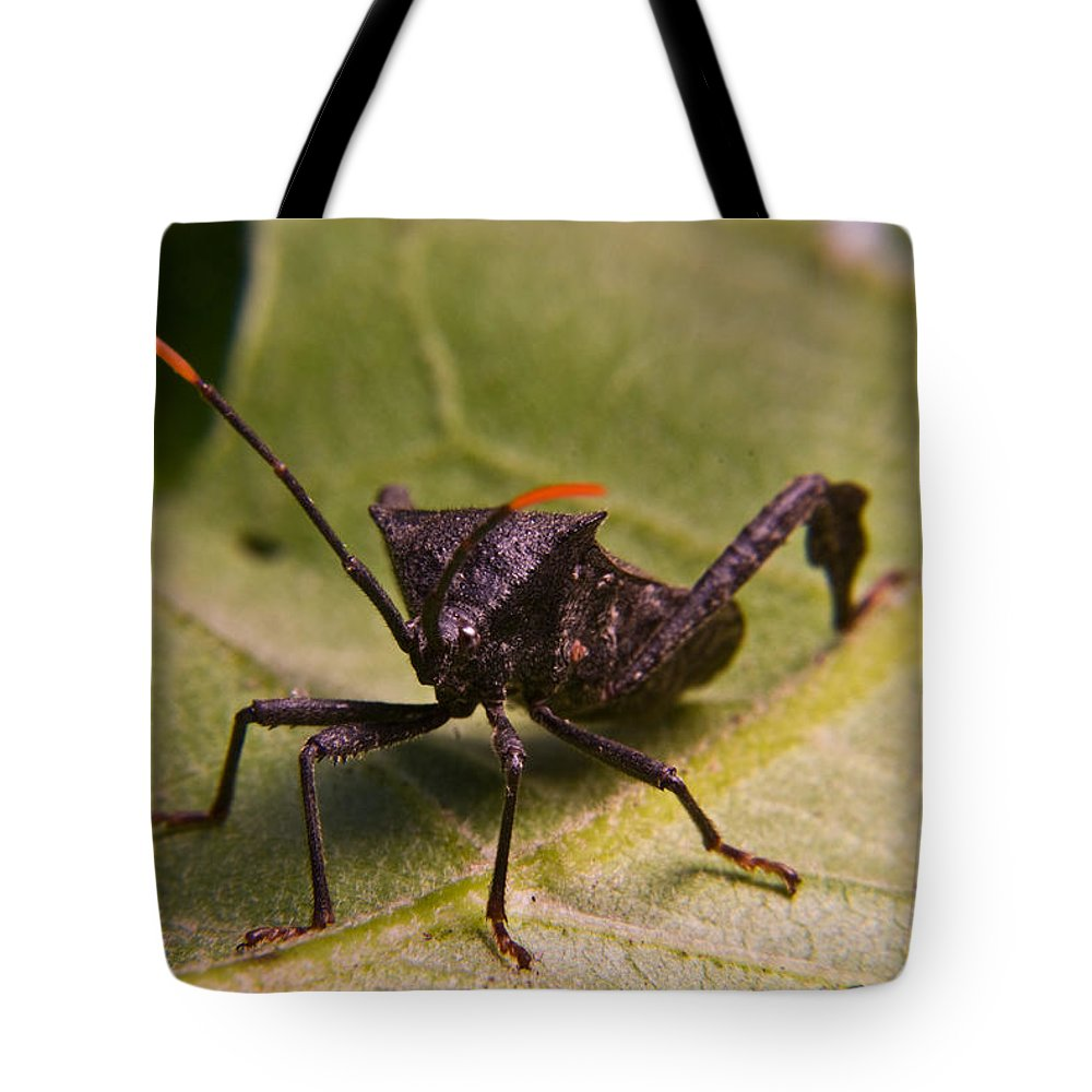 Orange Tote Bag featuring the photograph Orange Tipped Antennae by Douglas Barnett