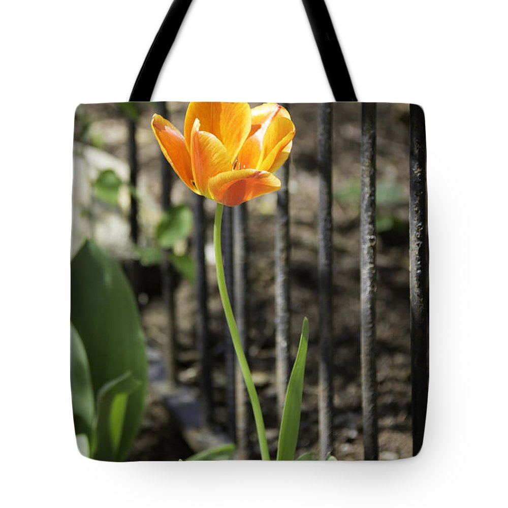Flowers Tote Bag featuring the photograph Orangey Tulip by Teresa Mucha