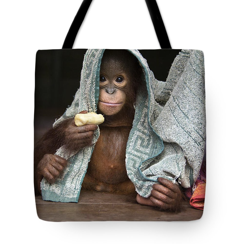 00486841 Tote Bag featuring the photograph Orangutan 2yr Old Infant Holding Banana by Suzi Eszterhas