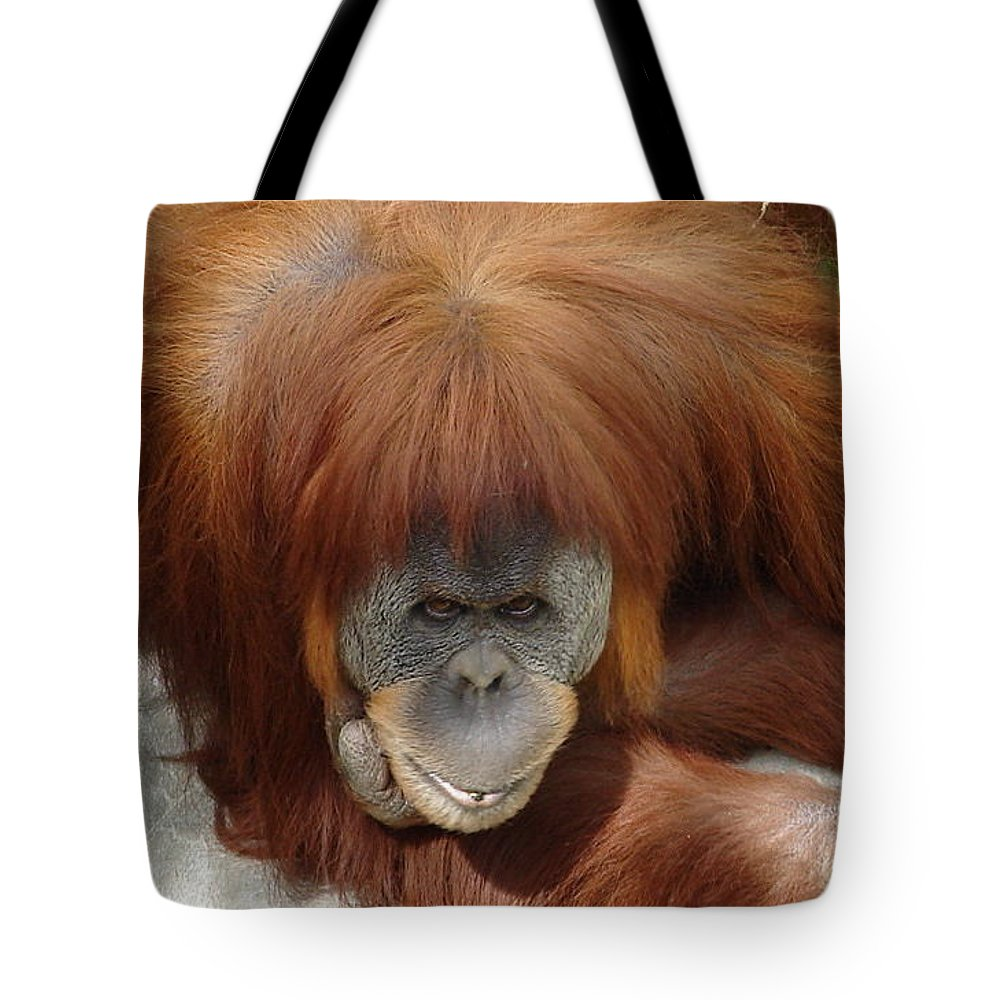 Red Ape Eyes Tote Bag featuring the photograph Orangutan by Luciana Seymour