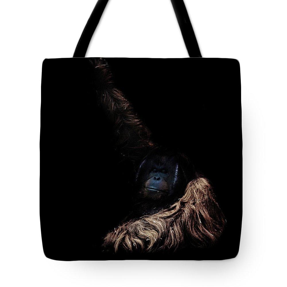 Orangutan Tote Bag featuring the photograph Orangutan by Martin Newman