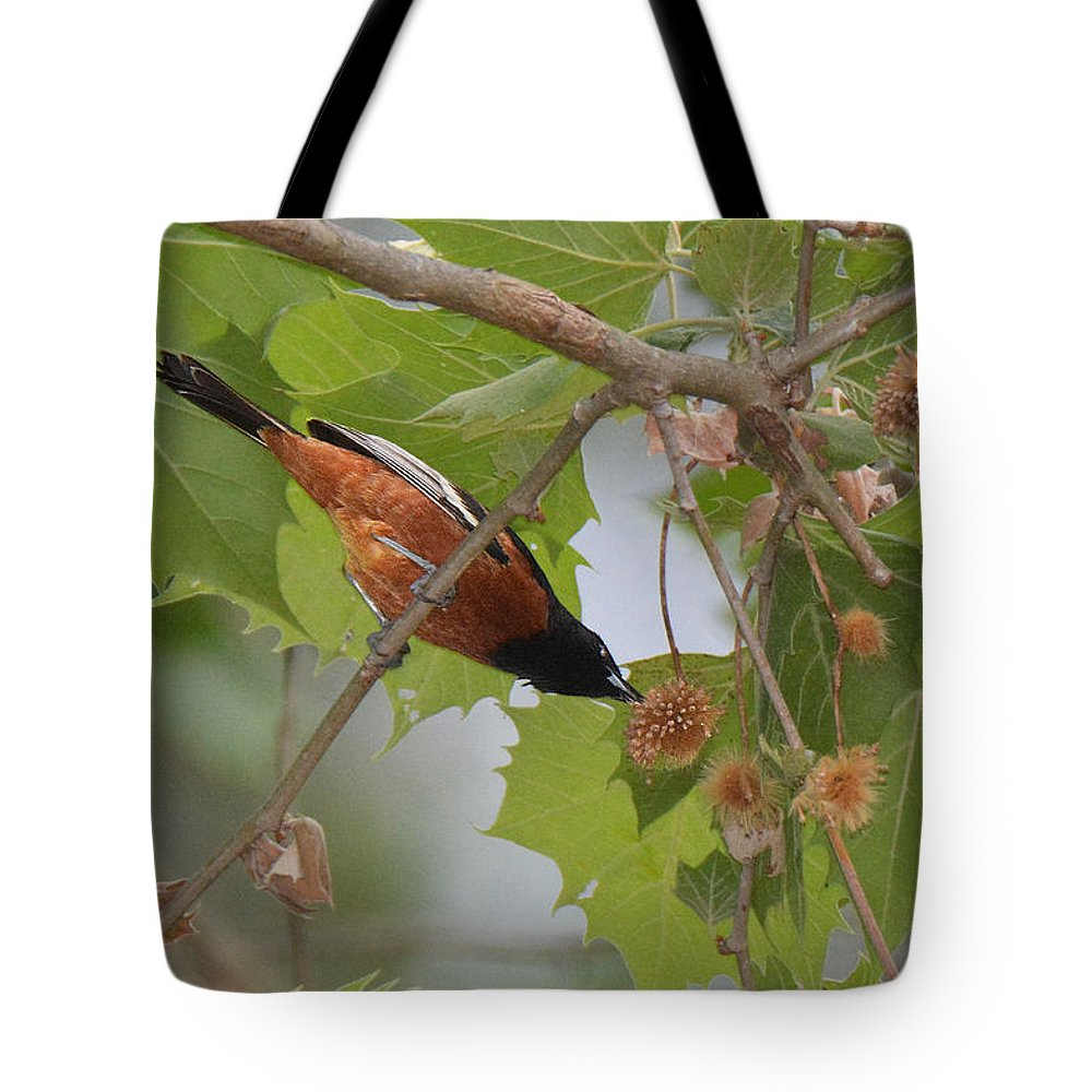 Bird Tote Bag featuring the photograph Orchard Oriole by Alan Lenk