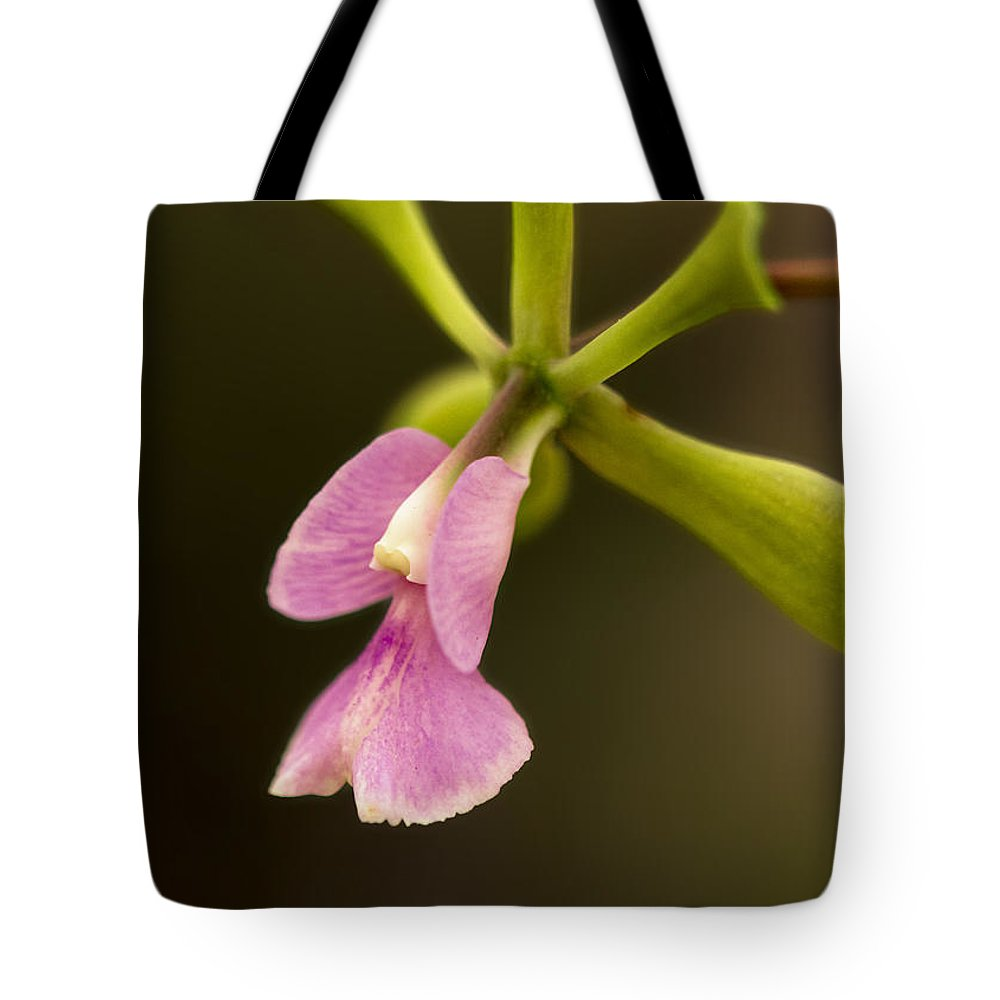 Orchid Tote Bag featuring the photograph Orchid In Bloom by Linda Tiepelman