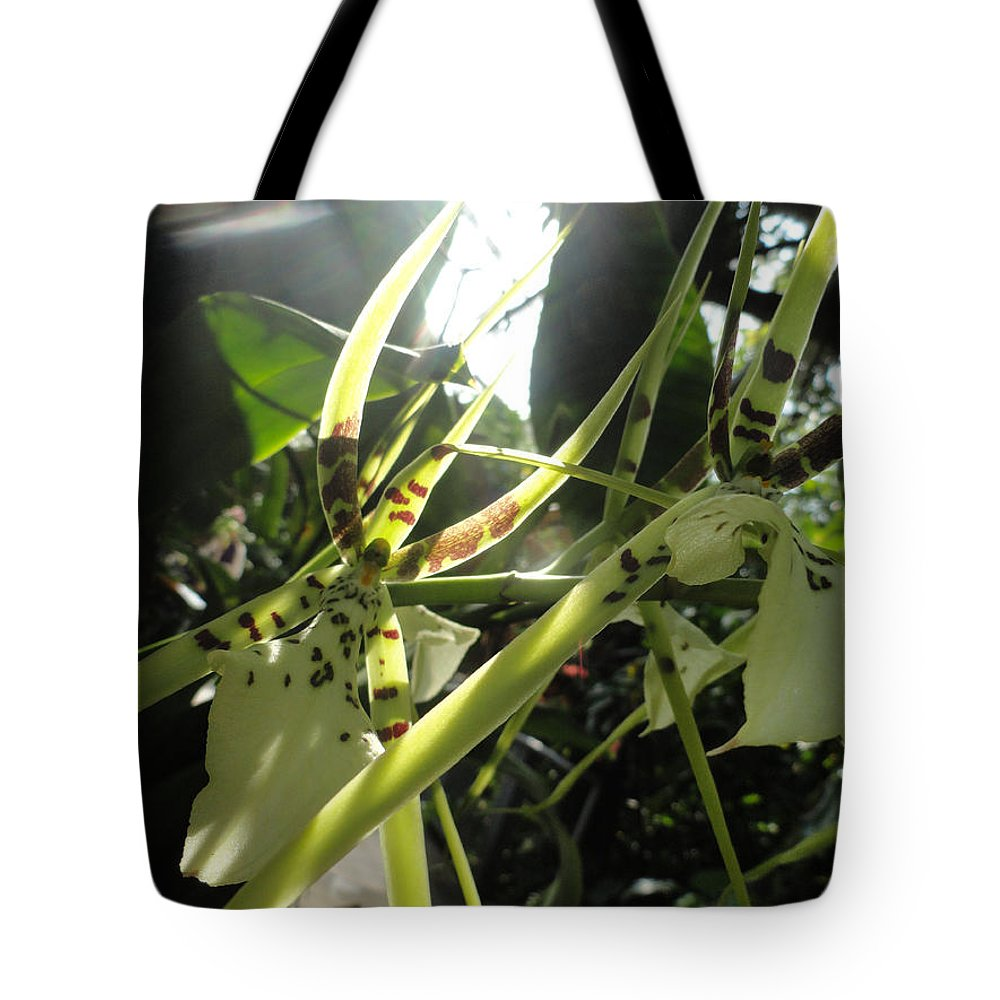 Orchid Tote Bag featuring the photograph Orchid Light by Trish Hale