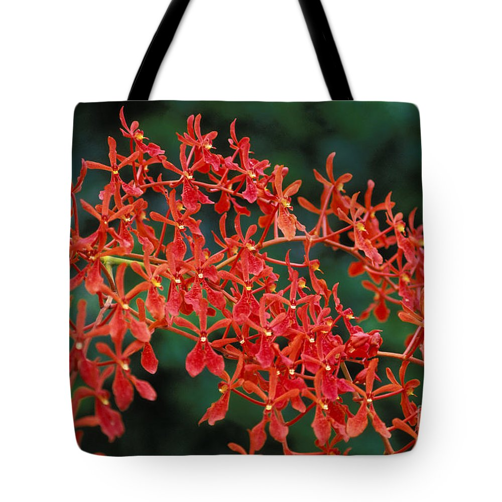 Attractive Tote Bag featuring the photograph Orchids by Gloria & Richard Maschmeyer - Printscapes