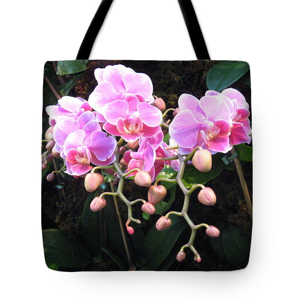 Orchid Tote Bag featuring the photograph Orchids by Marsha Elliott