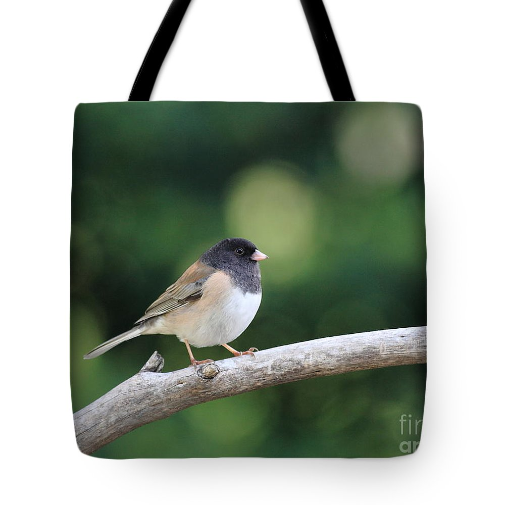 Wildlife Tote Bag featuring the photograph Oregon Junco by Wingsdomain Art and Photography