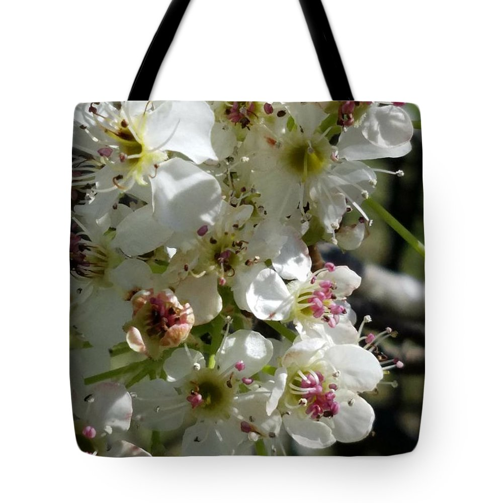 Ornamental Pear Tote Bag featuring the photograph Ornamental Pear by Maria Urso
