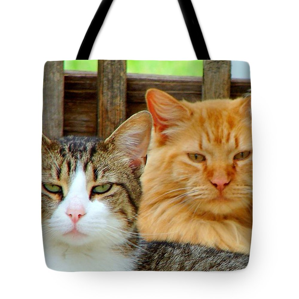 Cats Tote Bag featuring the photograph Oscar And Red by J R Seymour