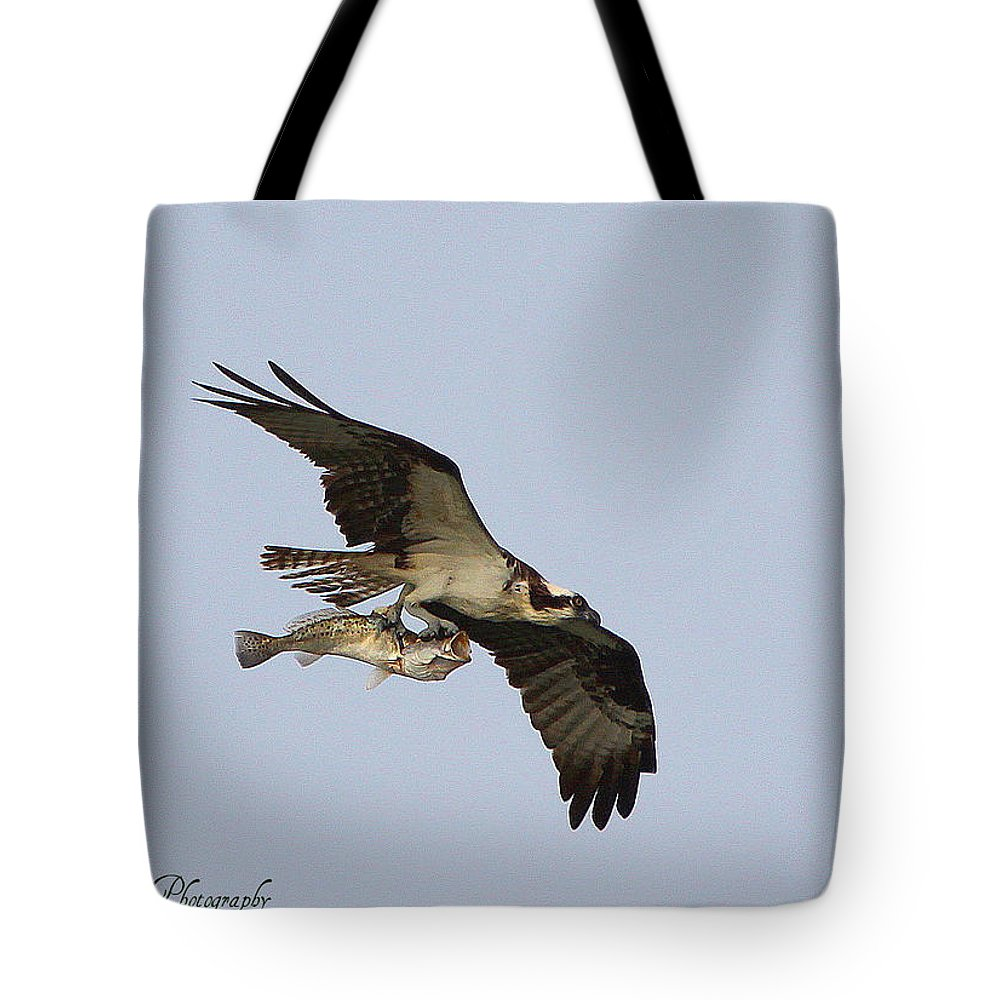 Osprey Catching A Fish Tote Bag featuring the photograph Osprey Catches A Fish by Barbara Bowen