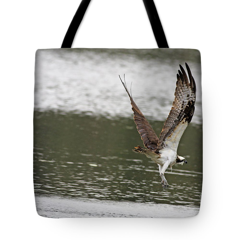 Osprey Tote Bag featuring the photograph Osprey Dive by Deborah Benoit