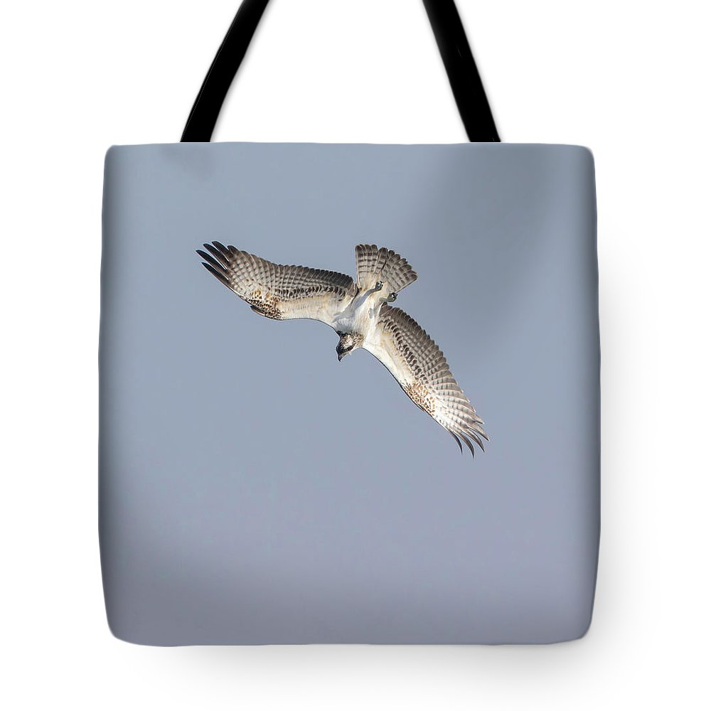 Osprey Tote Bag featuring the photograph Osprey Diving by Peter Walkden