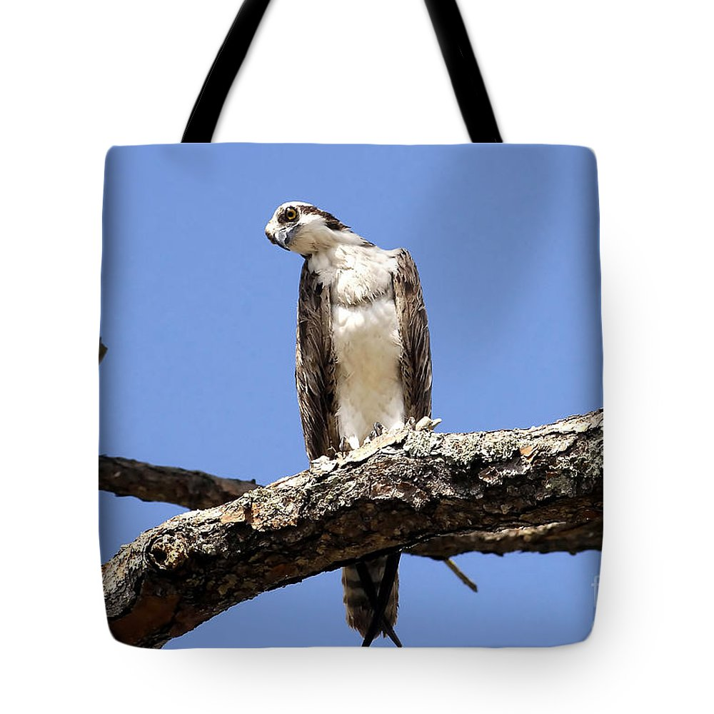 Osprey Tote Bag featuring the photograph Osprey In The Trees by David Lee Thompson