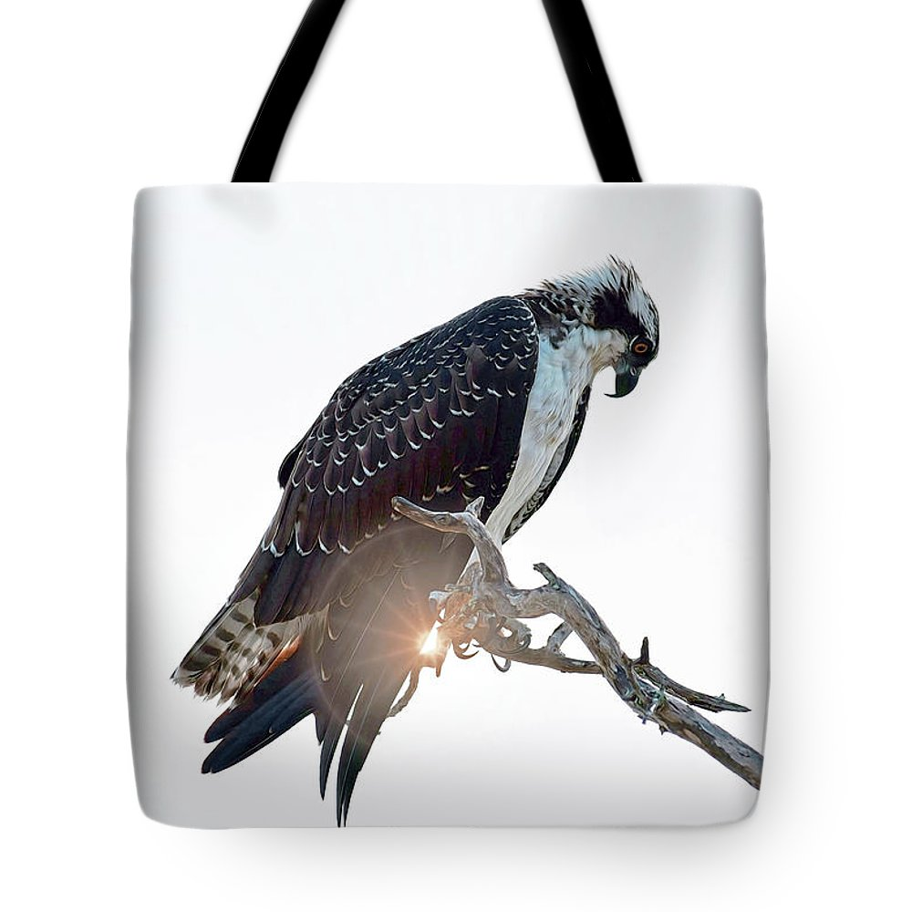 Osprey Silhouette Tote Bag featuring the photograph Osprey Silhouette by Patti Whitten