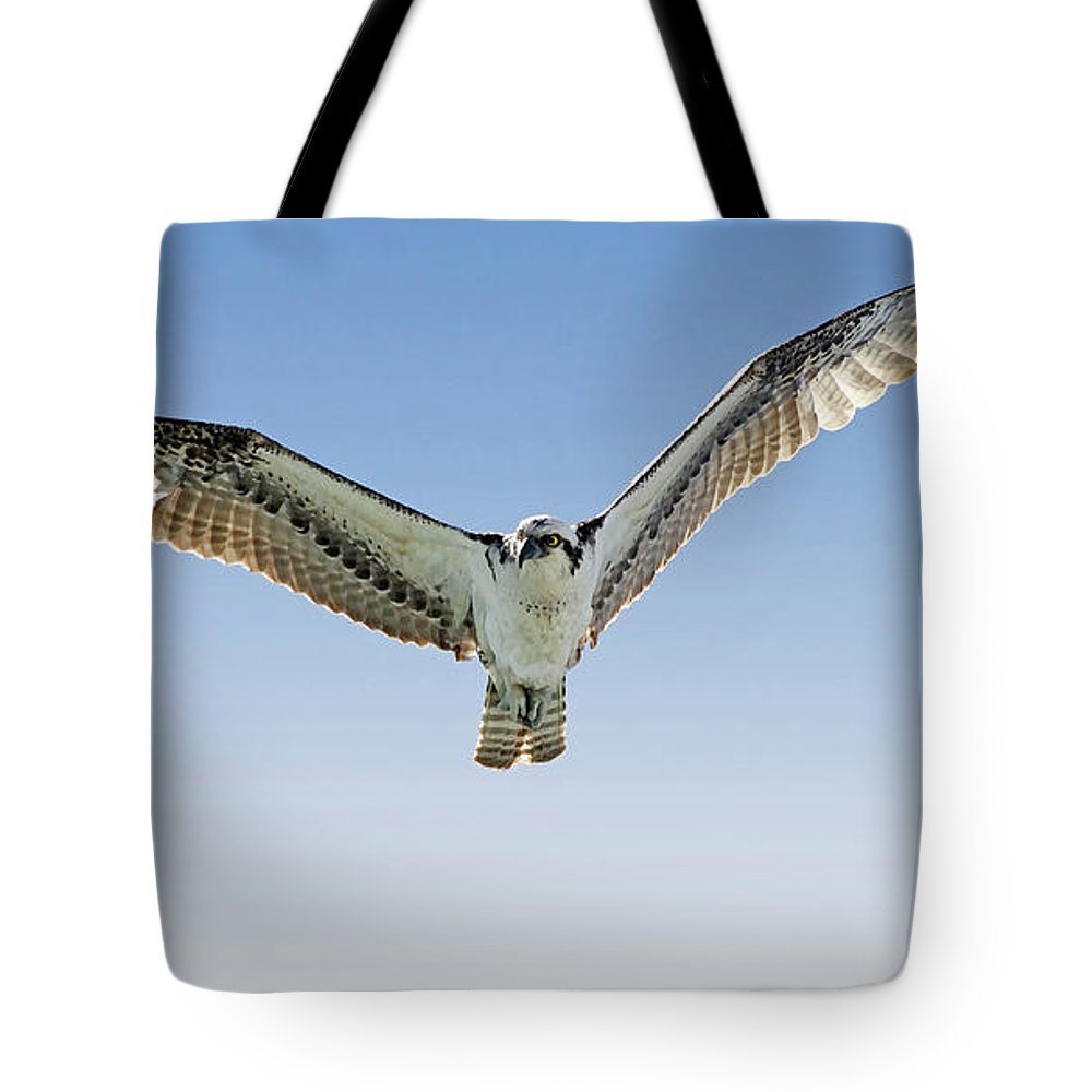 Osprey Tote Bag featuring the photograph Osprey Soar Search by Deborah Benoit