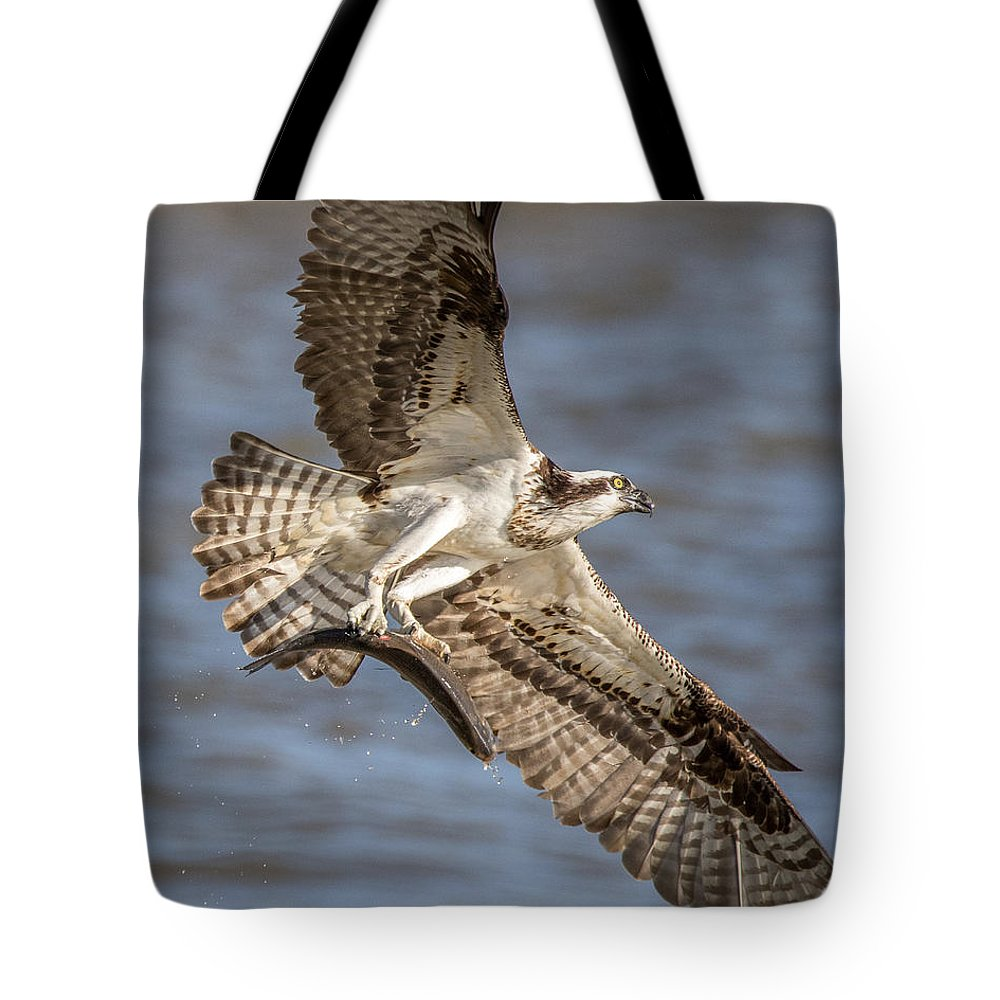 Osprey Tote Bag featuring the photograph Osprey Take-out by Jeff Carlson