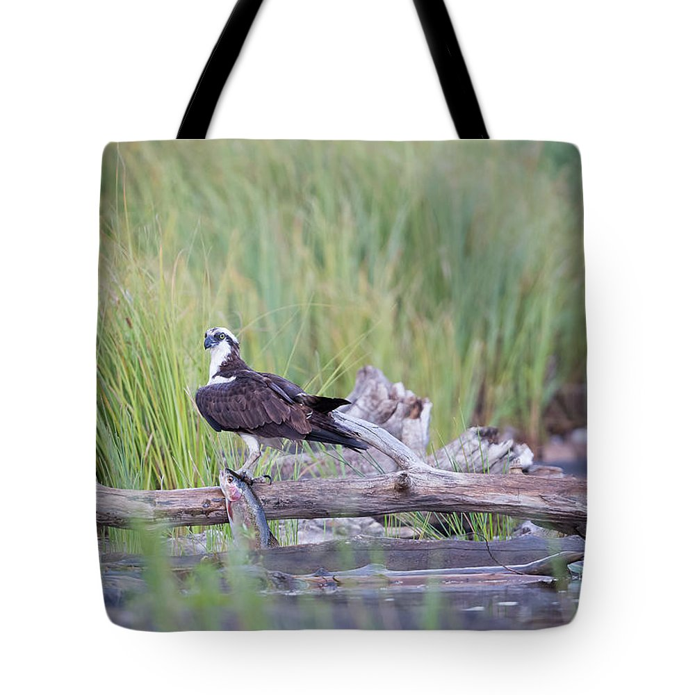 Avian Tote Bag featuring the photograph Osprey Victory by Robert L Moffat