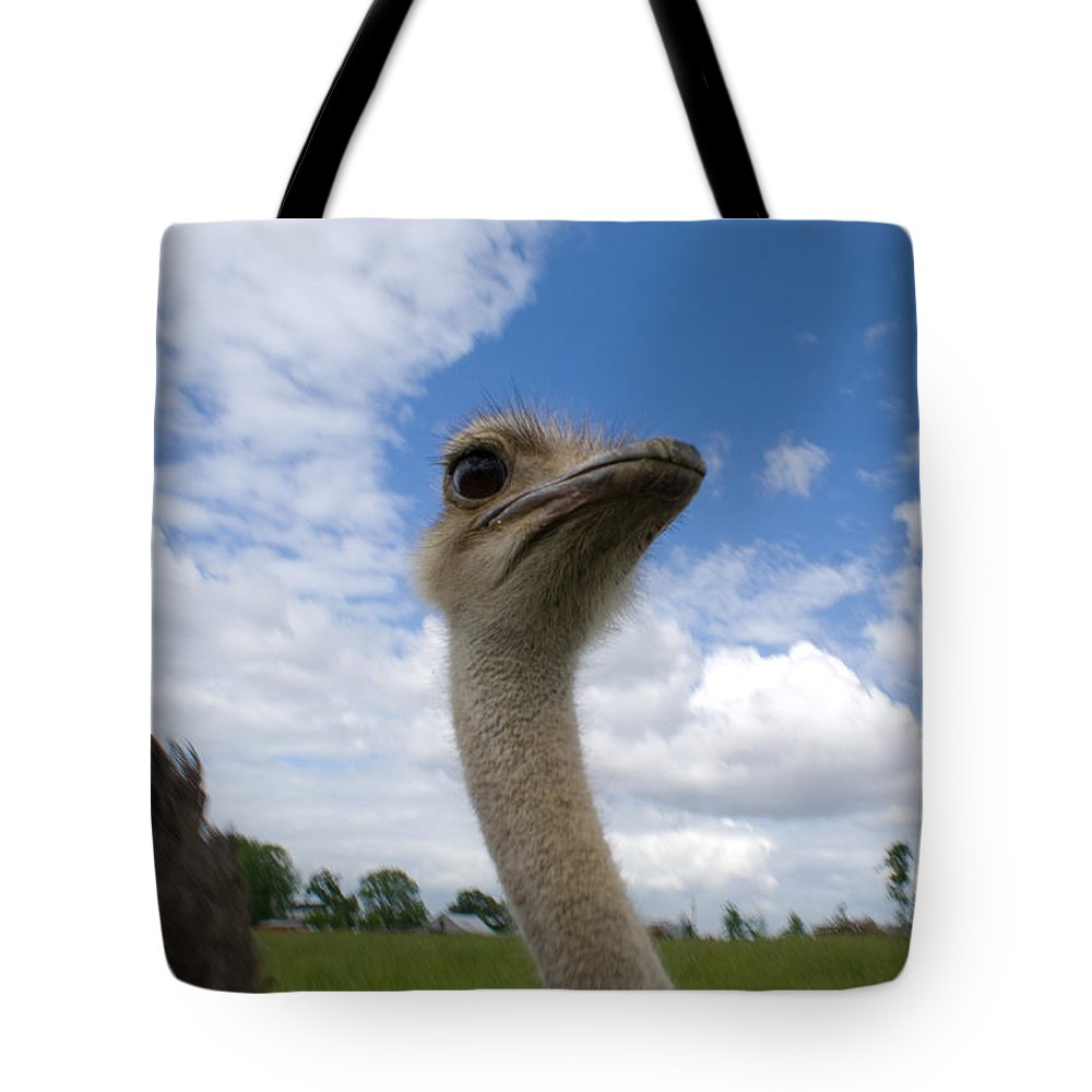 Ostrich Tote Bag featuring the photograph Ostrich High In The Sky by Douglas Barnett