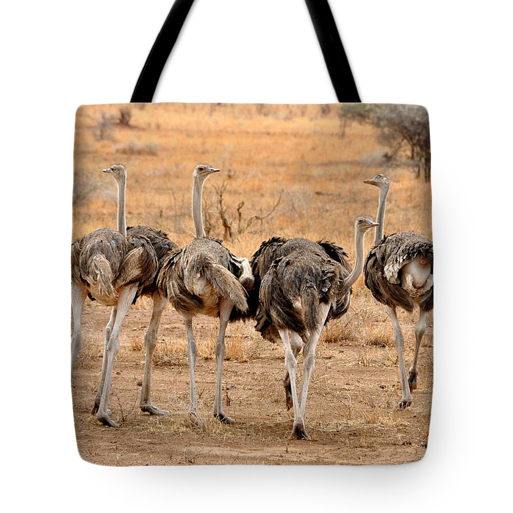 Nature Tote Bag featuring the photograph Ostrich by Rachel Young
