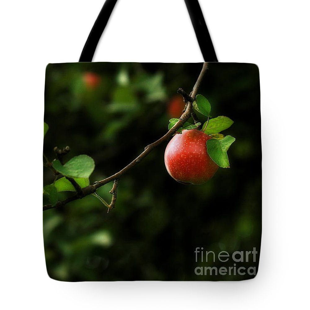 Adam And Eve Tote Bag featuring the photograph Out On A Limb A Tempting Photograph Of A Tasty Ripe Red Apple On A Tree by Angela Rath