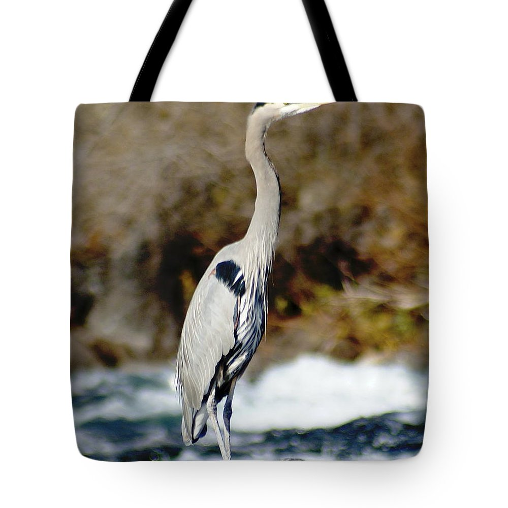 Birds Tote Bag featuring the photograph Outstanding On His Rock by Ben Upham III