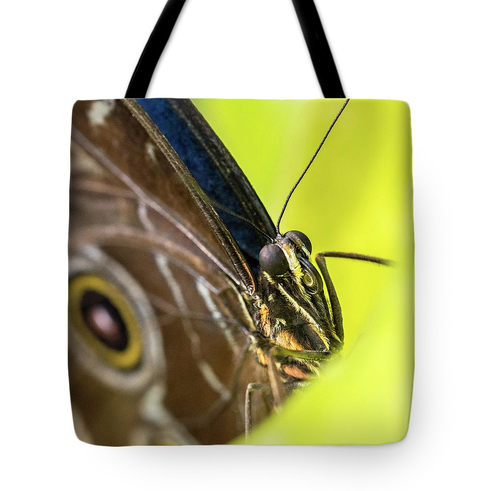 Butterfly Tote Bag featuring the photograph Owl Butterfly In Yellow Flower by Steven Jones