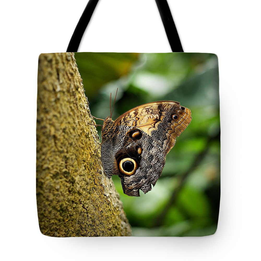 Butterfly Tote Bag featuring the photograph Owl Butterfly by Sandy Keeton